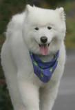 IMG_8378 dogs.jpg