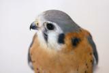IMG_8772 birds.jpg