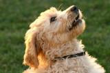 IMG_8873 dogs.jpg