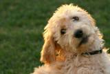 IMG_8875 dogs.jpg