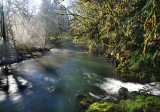 Fog, sun, river, creek & moss (Onlaska)