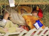 A tired chicken