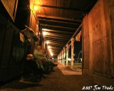 Night Life in the barn