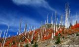 Mt St Helens Blast area