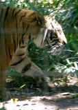 Naples Zoo 07