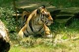 Nashville Zoo 07