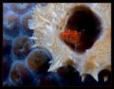Tube Dweller