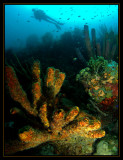Another Bonaire Reefscape