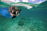Snorkeling at the Sand Dollar Reef Balls
