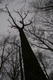 Sky High Trees 2