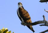 Osprey: Wings of Power
