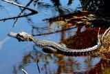Reptilians & Sealife