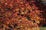 Trees & Seasons