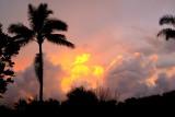 Tropical Flames