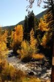 ASPEN Colors Rocky Mtn Natl Park