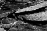 Rocky Stream with Fall Leaves