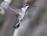 Female in flight