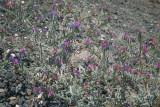 SanTorini2007SDIM2927.jpg