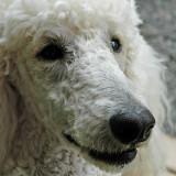13 Jan 07 - The white dog