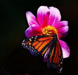 Butterflies of Last Summer