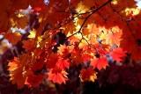 Mt. Auburn Foliage