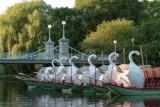 Swan Boats at Dusk, Public Garden