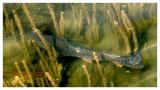 May 26, 2007 --- Sylvan Lake, Alberta
