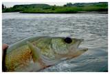 July 16, 2007 --- Red Deer River, Alberta