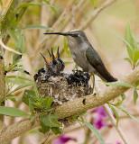Baby Baby Birds