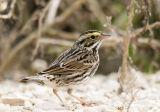 Upper Texas Coast Birds (UTC)