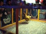 Chicken Shit Bingo