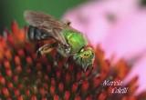 GREEN BEE-8871.jpg