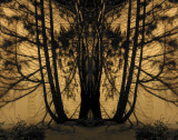 Night Shadows_331a