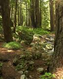 Spring under the Redwoods - 2007