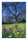 Spring Flowers Beacon Hill Park