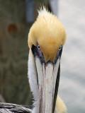 Fort Walton Beach -- Orlando, Florida 2007