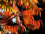 2006-10-16 Orange