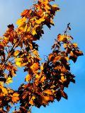 2006-10-25 Orange and blue