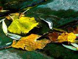 2006-11-11 Fall colours