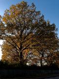 2006-11-10 Fall