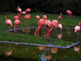 2006-11-20 Flamingo