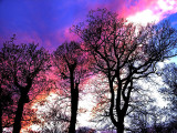 2006-11-26 Colours
