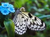 2007-02-17 BW butterfly