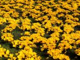 2007-03-12 Spring