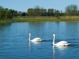 2007-05-04 Swans