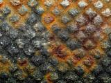 2007-05-07 Rust