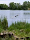 2007-05-12 Dyrehaven