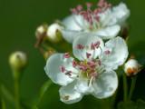 2007-05-13 White flower