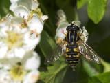 2007-05-21 Fly