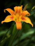 2007-06-27 Orange